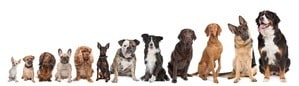 line of preferred breeds of dogs.