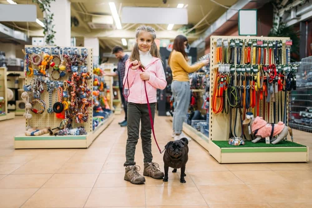 girl testing dog leash at store