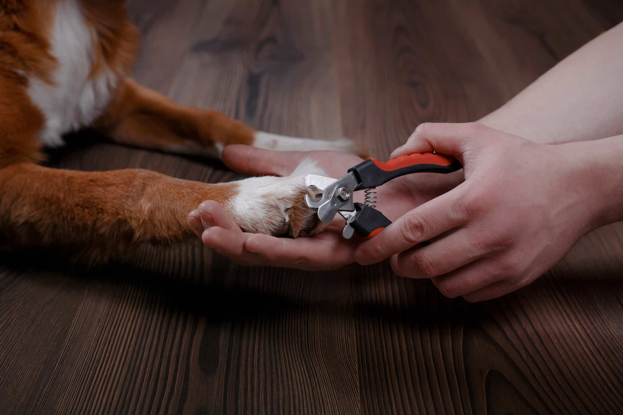 The Best Dog Nail Clipper Trimmer Reviews In 2019