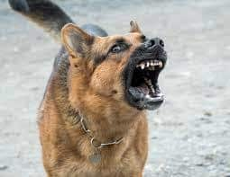dog barking with no training collar