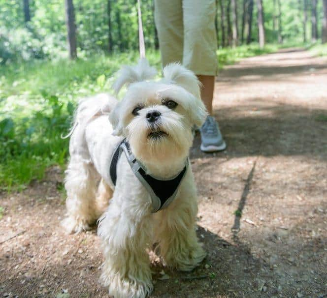 Best Dog Harness for Hiking | Top Picks and Reviews
