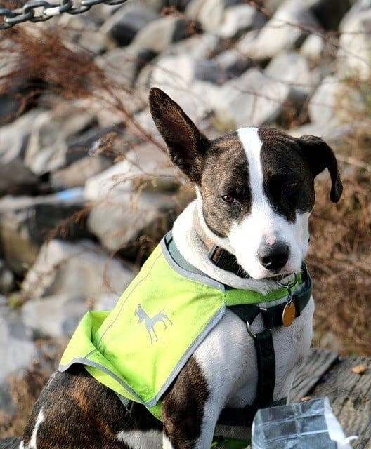 dog in neon green life jacket