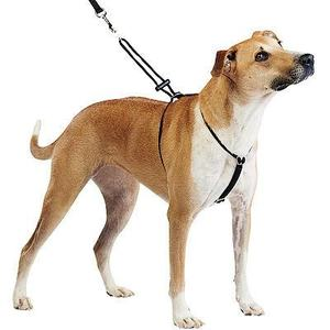 large dog in step-in harness