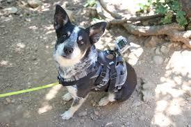 dog in front attachment harness