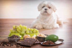small dog and foods to avoid