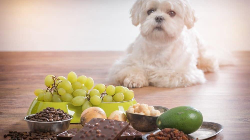What To Feed If I Ran Out Of Dog Food Alternative Meal
