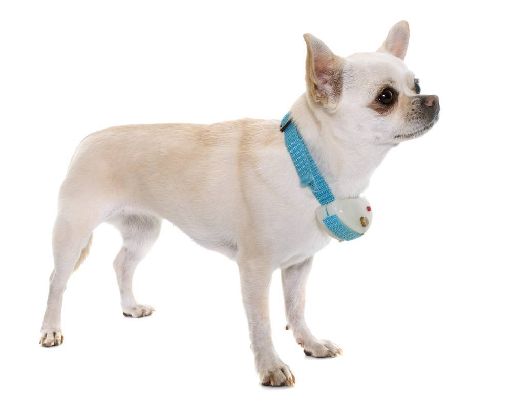 Best Bark Control Collar For Small Dogs
