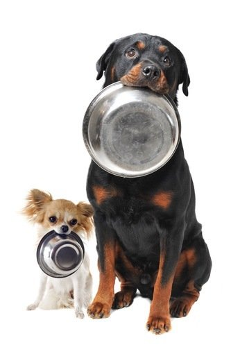 two dogs waiting for food