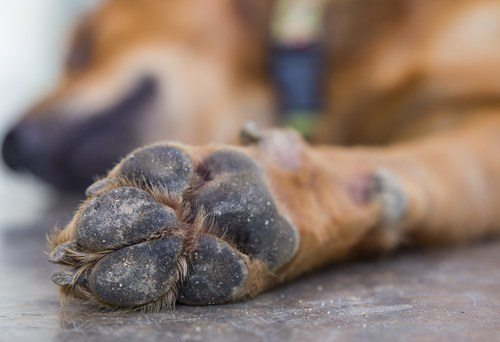 brown dog paw.