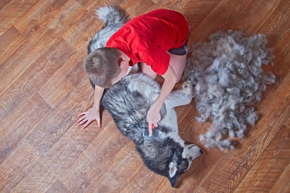 boy brushing pet dog.