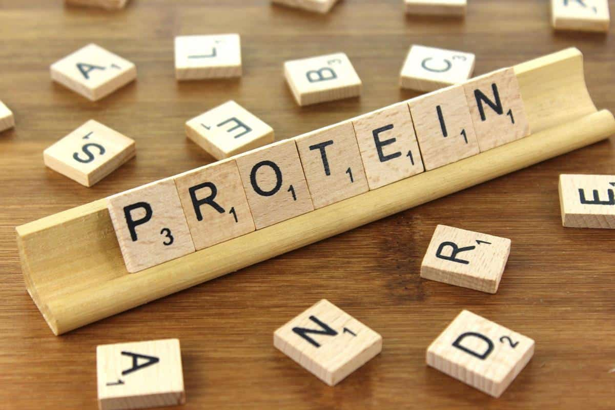 protein words