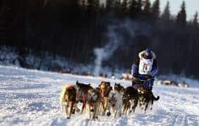 Dog racing in the snow