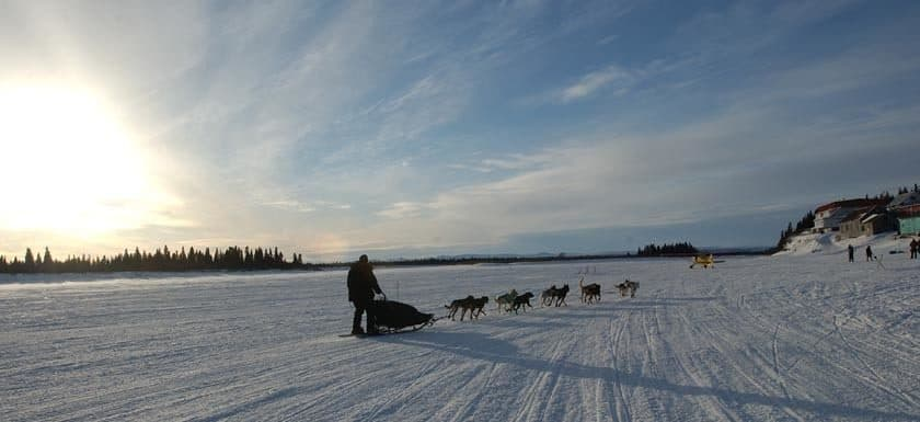 dog sledding in the snow.