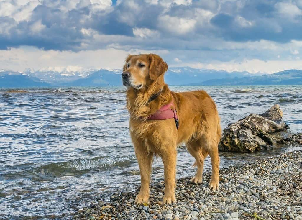 dog standing by lake