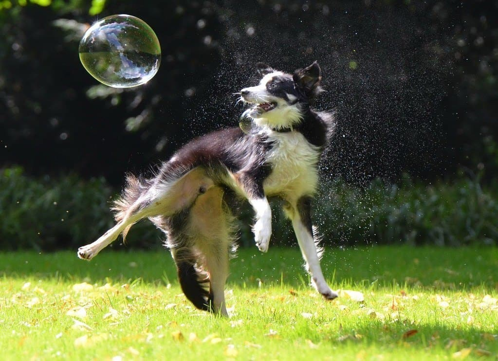 dog playing in shampoo bubbles