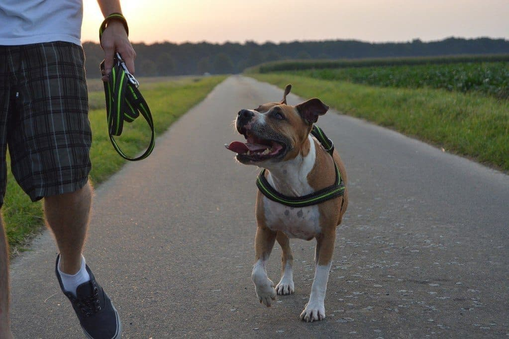dog wearing paw five no-pull harness
