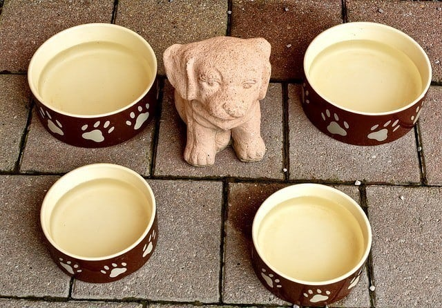 ceramic water bowls for dogs