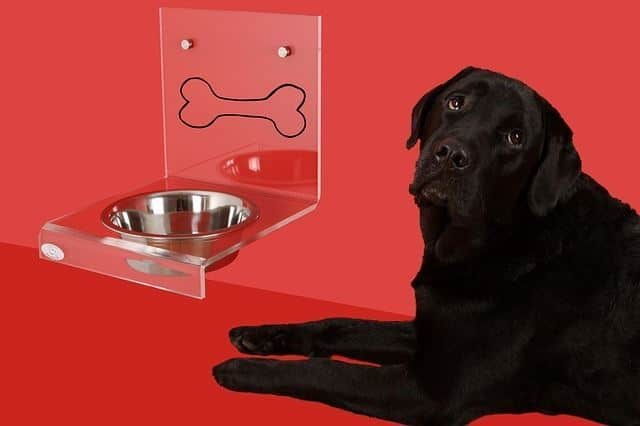 black dog drinking from metal bowl