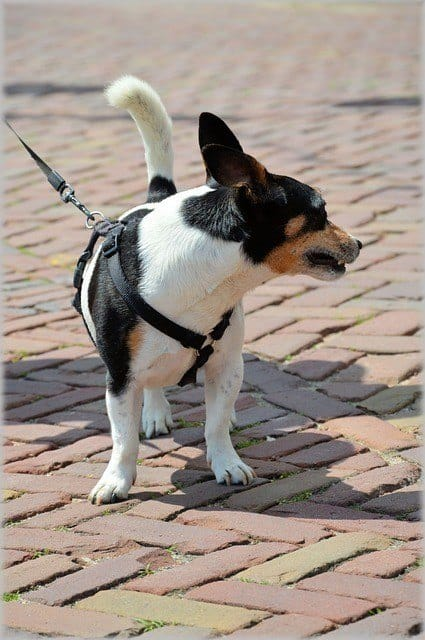 small dog standing on bricks