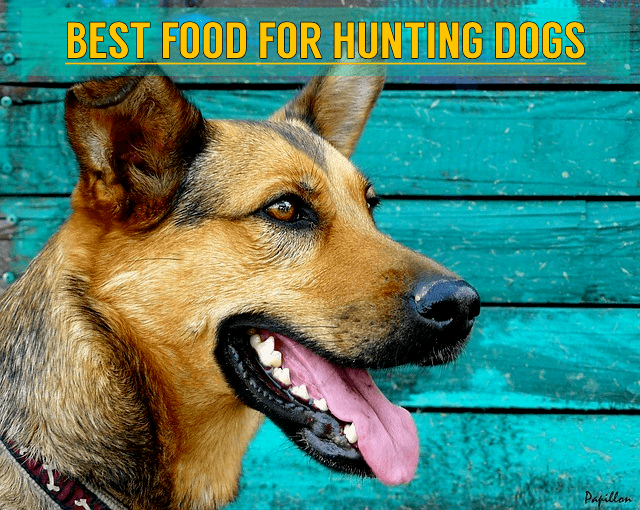 best dog food for hunting dogs in 2019