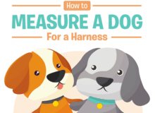 measuring dog harness