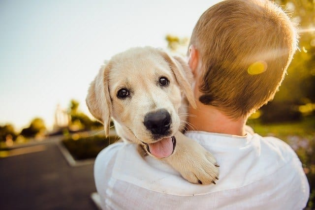 white dog being held