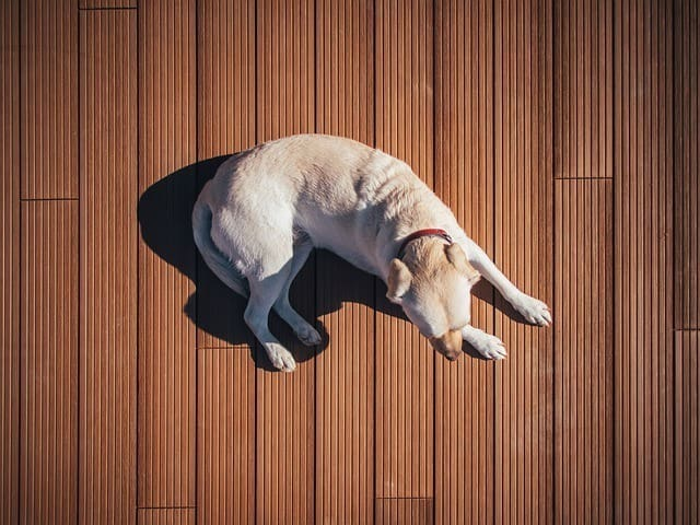 dog laying on wood floor