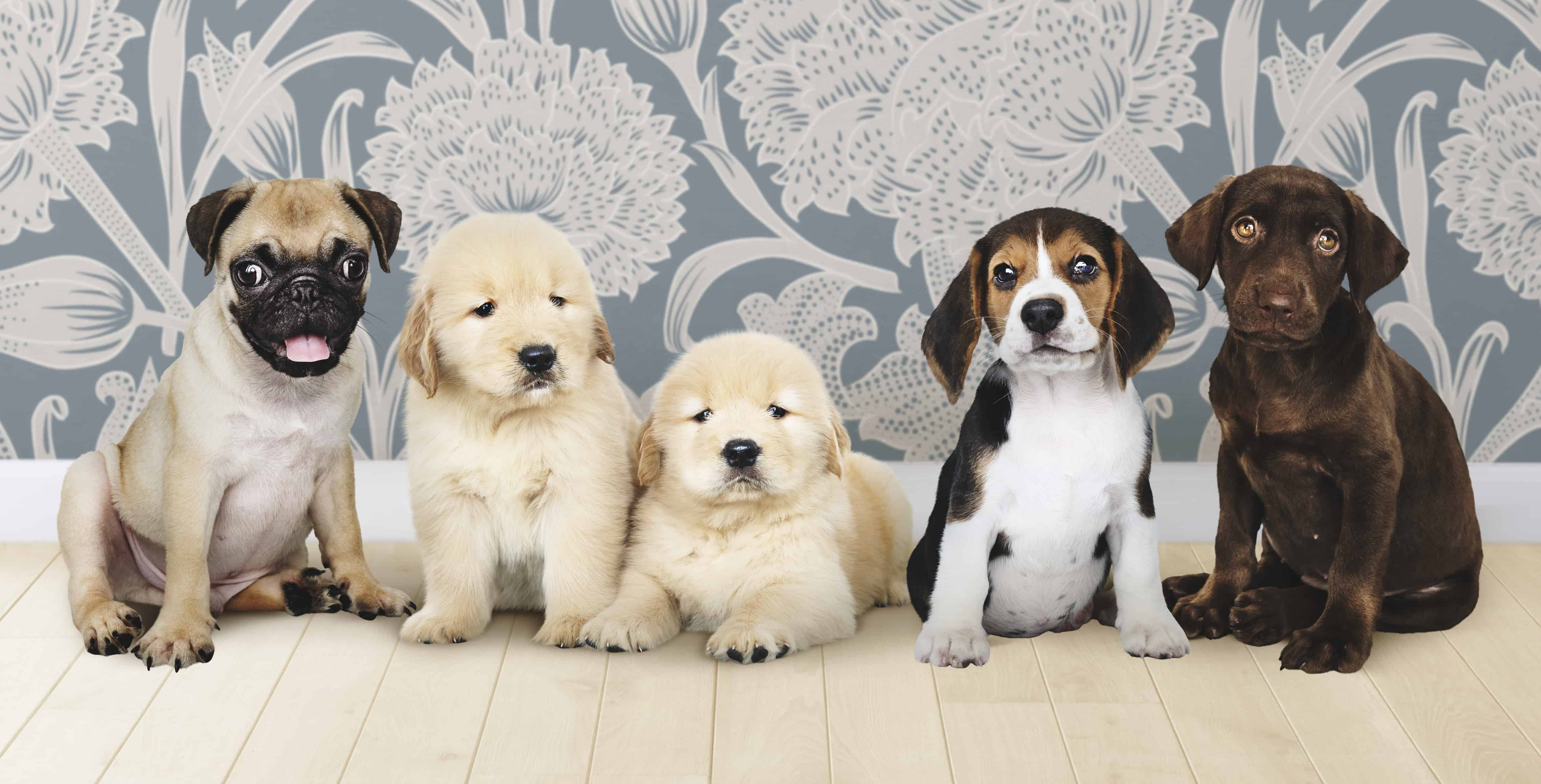 Group portrait adorable puppies