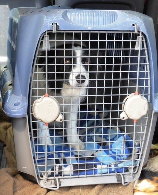dog in portable cage