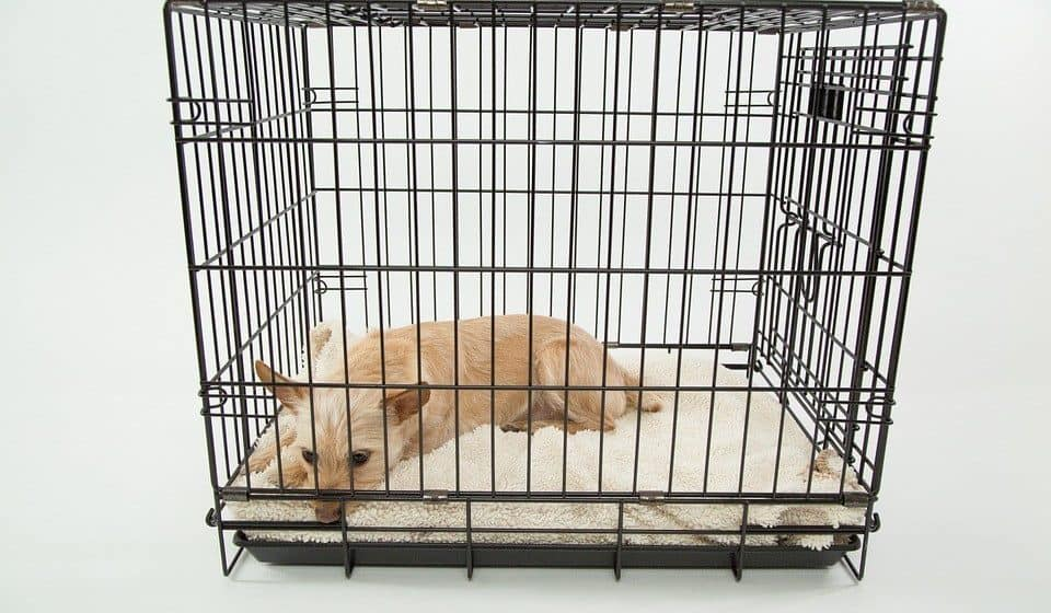 dog inside crate