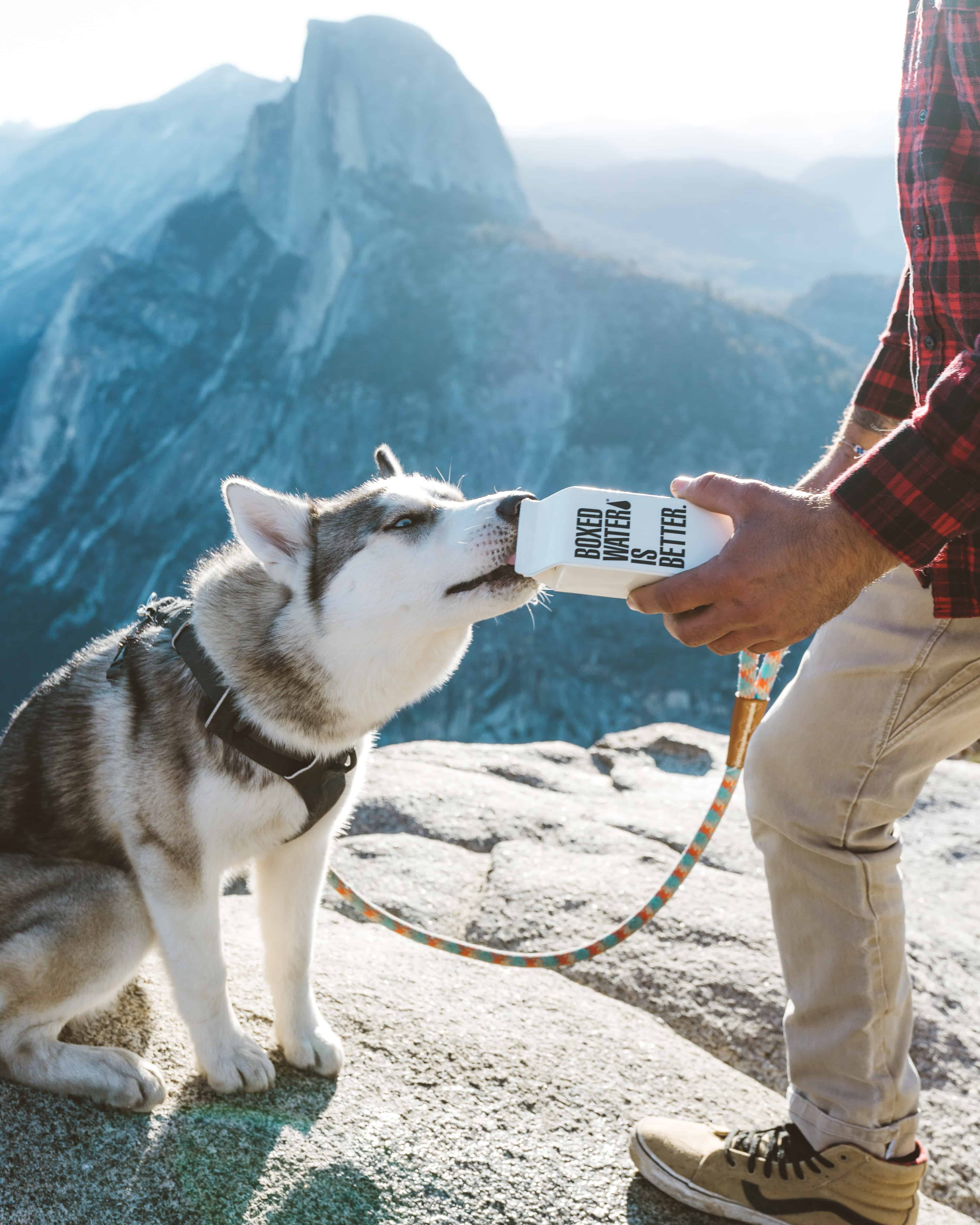 dog drinking water on mountain