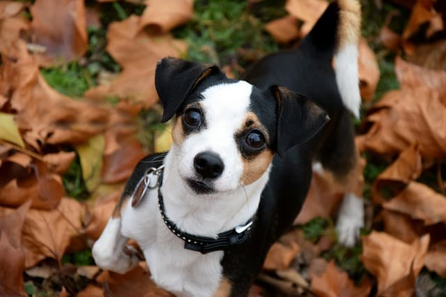 small dog playing on leaves