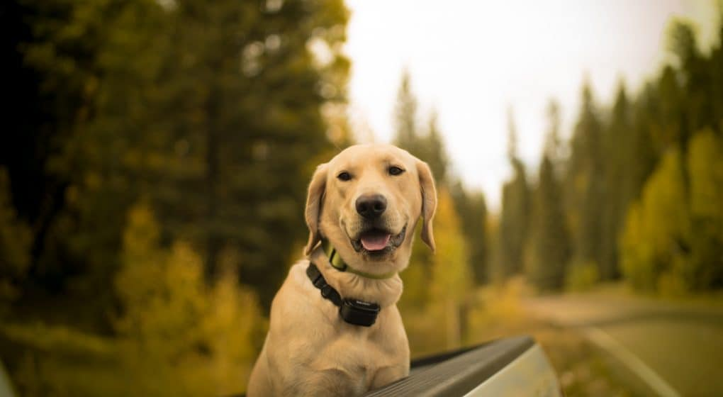 dog sitting in back of truck
