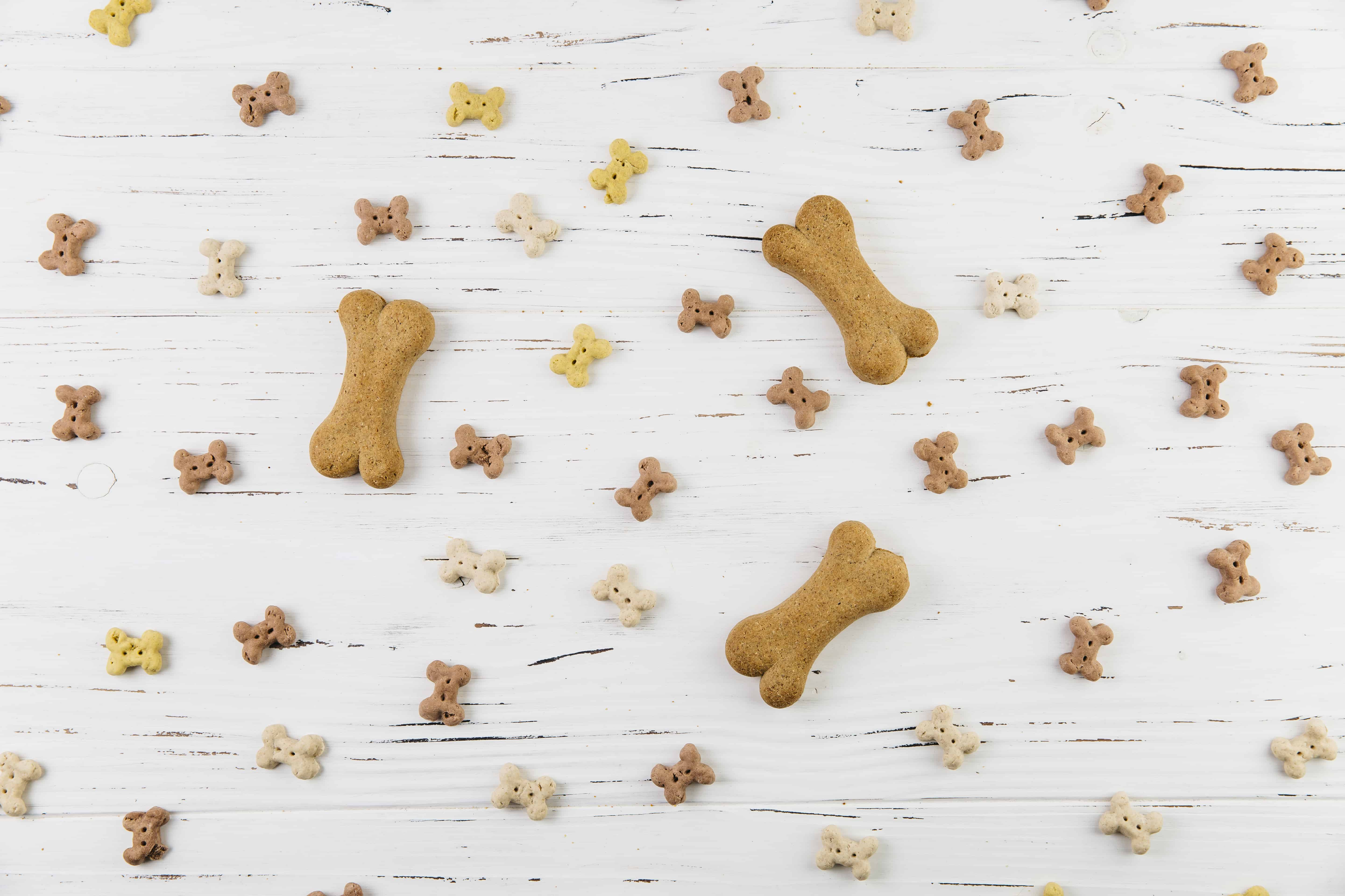 scattered dog food and treats